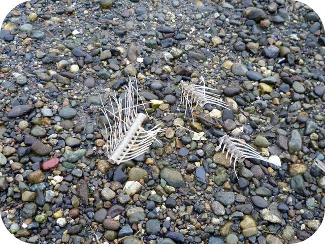 The fish bones