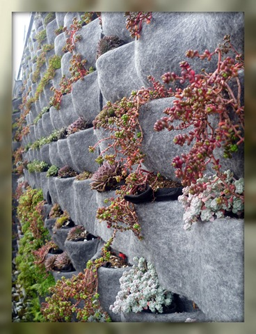 Left corner plant wall