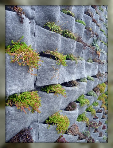 Right corner plant wall
