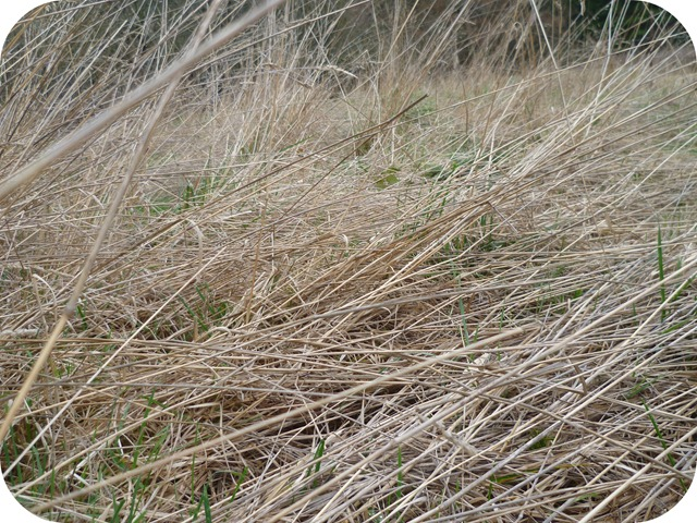 Dried grass field