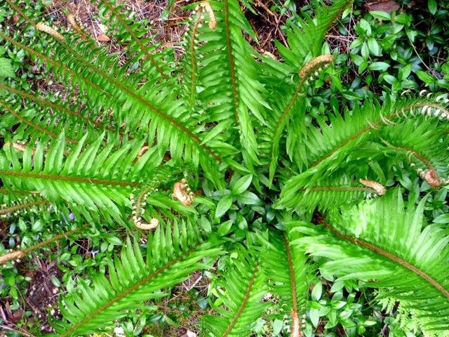 A fern from last year