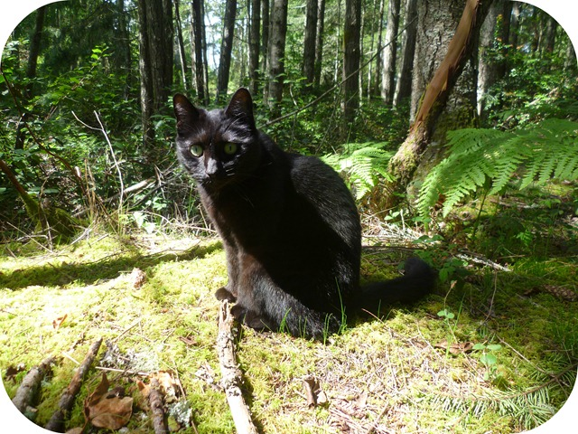 Delilah in the forest