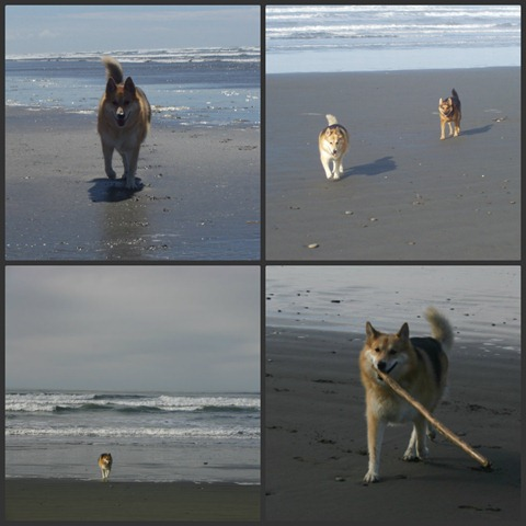 Rosy at the beach Collage