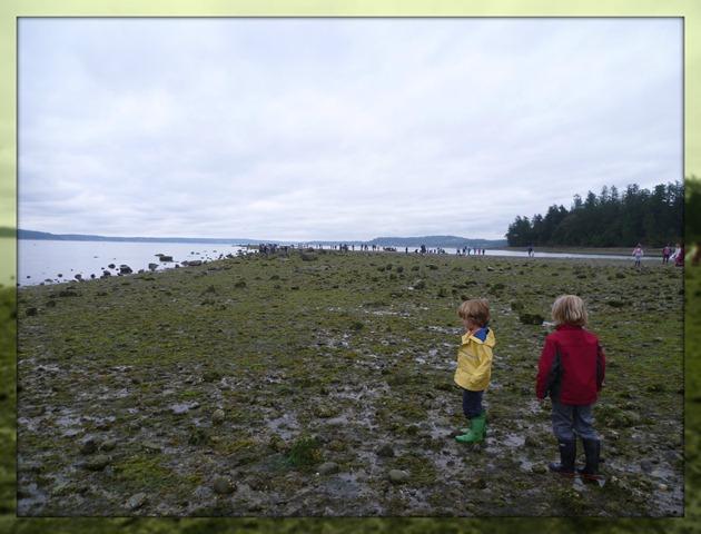Field Trip Low Tide