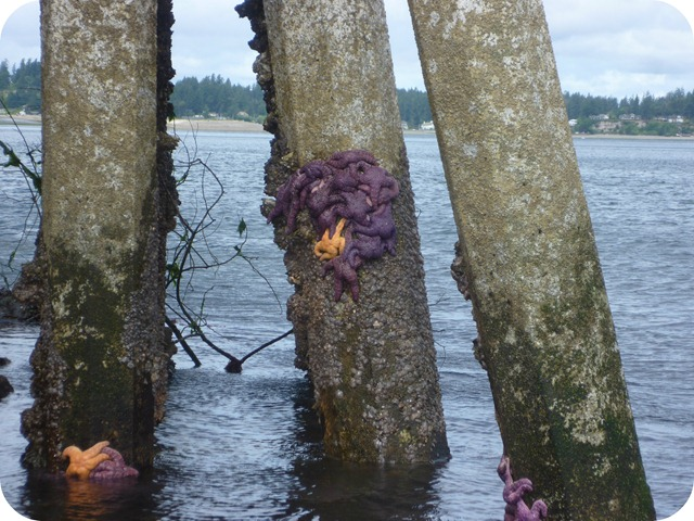 Low tide sea stars under bridge