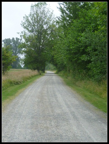 Nisqually Dirt Road