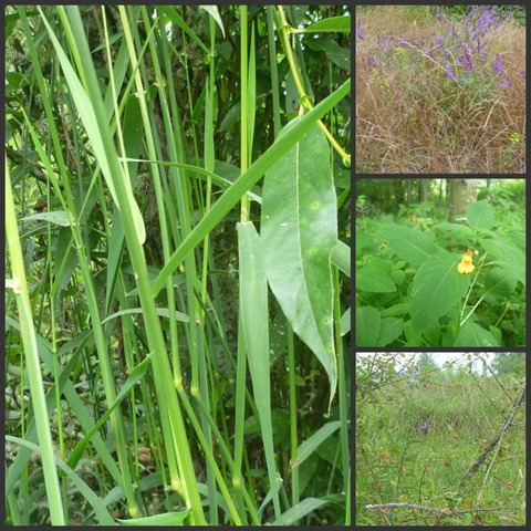 Nisqually Flowers Collage