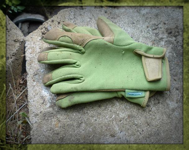 Blueberry gloves
