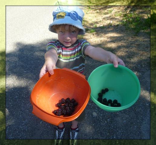 SS Carter berry picking