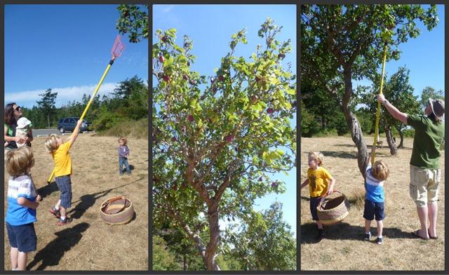 Plum Tree Collage