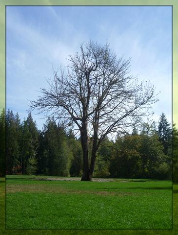 SS The walk tree