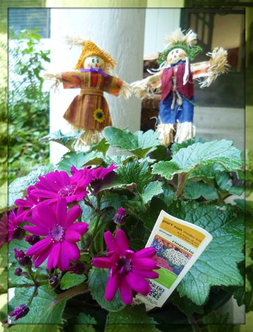 Annual Plant with Scarecrows