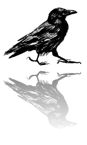 Racecar Raven
