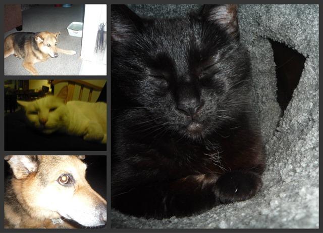 C and C Pet Collage