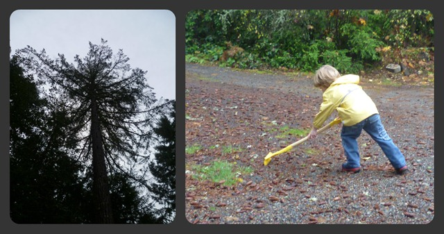 Raking pinecone collage
