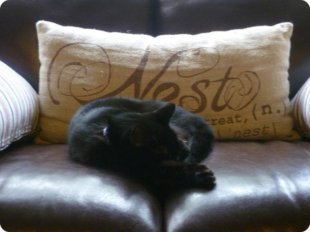 Delilah napping