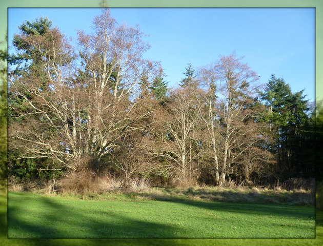 Visit - Trees