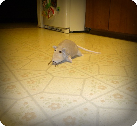 Rat in the Kitchen