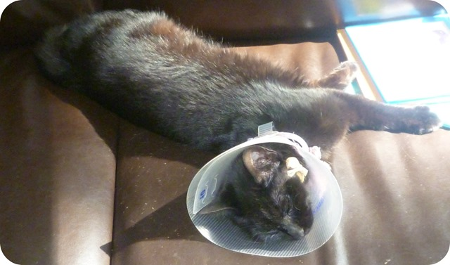 Delilah and the cone of shame