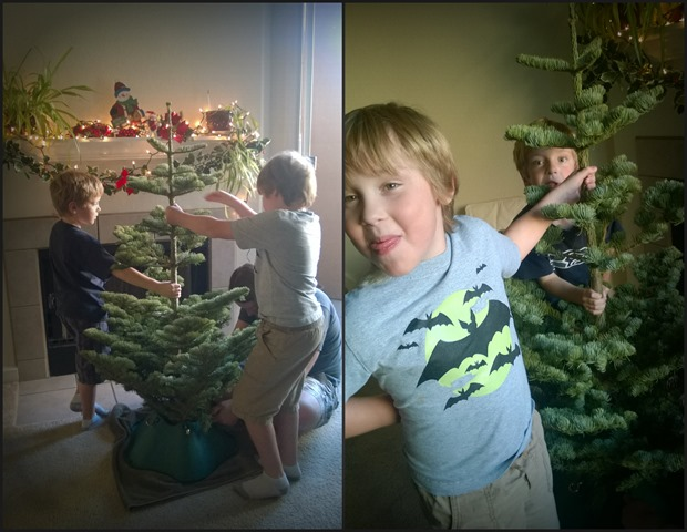 Boys with Tree Collage