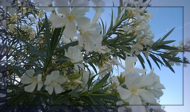 FlowersOnOurWalk