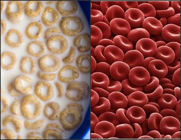 Cheerios vs Red Blood Cells Collage