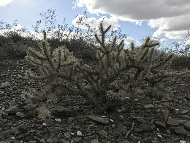Christmas Hike Cactus 1