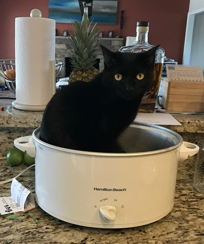 Crock Pot Cat